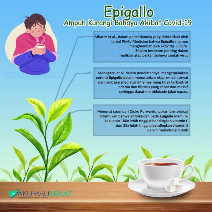 Berkenalan dengan Epigallo, Kandungan Teh Hijau yang Diteliti Mampu Kurangi Bahaya Akibat Covid-19
